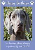 "Weimaraner-Happy Birthday - ""From The Dog"" Theme"